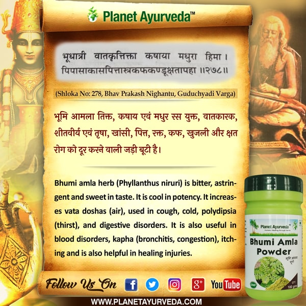 Bhumi Amla (Phyllanthus niruri) Powder - Usage, Dosage and Benefits